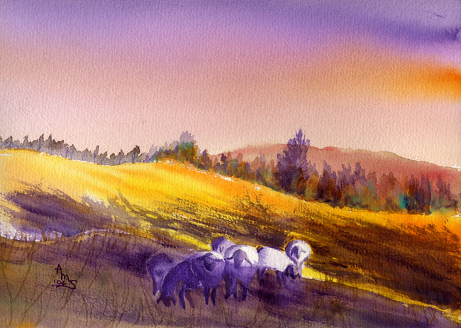 Sunset Sheep - #79