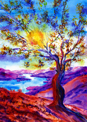 Olive Tree, Sunset